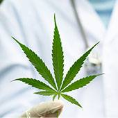 20210309_288_Cannabis_medical_Conclusions_CSST_Main_tient_feuille_170x170